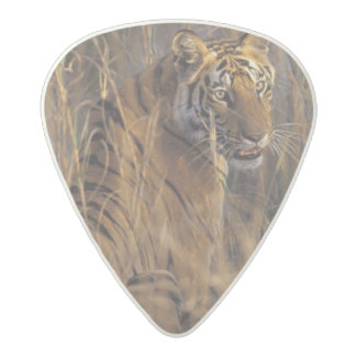 Asia, India, Bandhavgarth National Park, A Acetal Guitar Pick