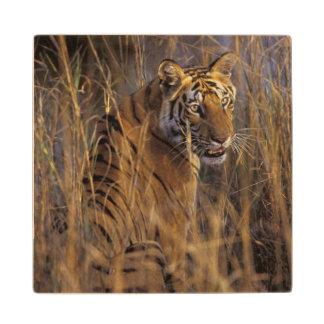 Asia, India, Bandhavgarth National Park, A Wood Coaster