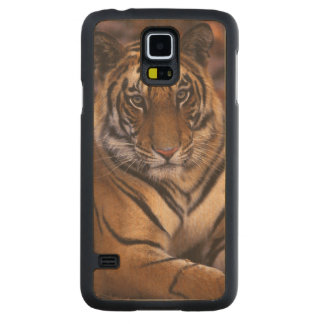 Asia, India, Bandhavgarth National Park, Carved Maple Galaxy S5 Case