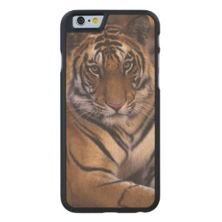 Asia, India, Bandhavgarth National Park, Carved Maple iPhone 6 Case