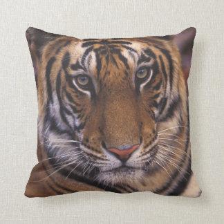 Asia, India, Bandhavgarth National Park, Cushion