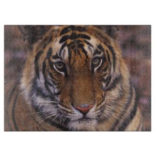 Asia, India, Bandhavgarth National Park, Cutting Board