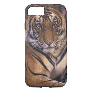 Asia, India, Bandhavgarth National Park, iPhone 8/7 Case