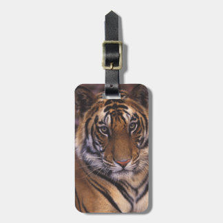 Asia, India, Bandhavgarth National Park, Luggage Tag