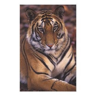 Asia, India, Bandhavgarth National Park, Photo Art