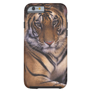 Asia, India, Bandhavgarth National Park, Tough iPhone 6 Case