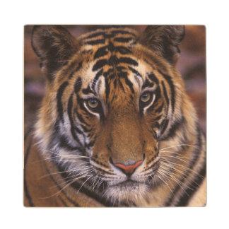 Asia, India, Bandhavgarth National Park, Wood Coaster