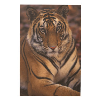 Asia, India, Bandhavgarth National Park, Wood Print