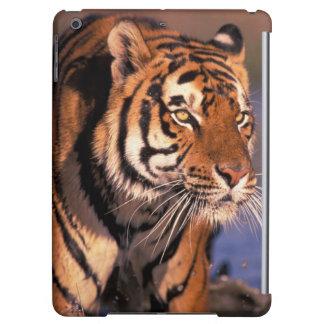 Asia, India, Bengal tiger Panthera tigris);
