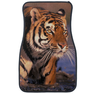 Asia, India, Bengal tiger Panthera tigris); Car Mat