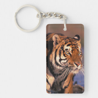 Asia, India, Bengal tiger Panthera tigris); Double-Sided Rectangular Acrylic Key Ring
