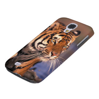Asia, India, Bengal tiger Panthera tigris); Galaxy S4 Case