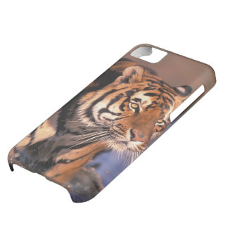 Asia, India, Bengal tiger Panthera tigris); iPhone 5C Case