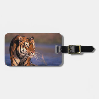 Asia, India, Bengal tiger Panthera tigris); Luggage Tag