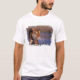 Asia, India, Bengal tiger Panthera tigris); T-Shirt