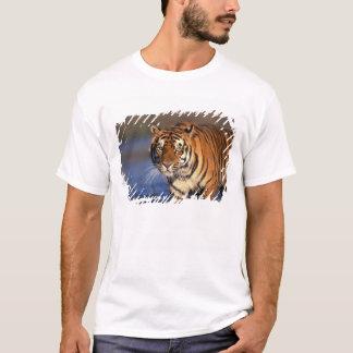 ASIA, India, Bengal Tiger Panthera tigris) T-Shirt