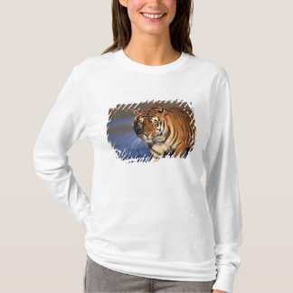 ASIA, India, Bengal Tiger Panthera tigris) T-Shirt