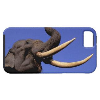 Asia, India, Kaziranga National Park, Assam. Case For The iPhone 5