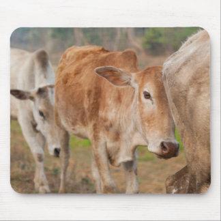 Asia, India, Meghalaya, Bajengdoba. Cattle Walk Mouse Mat