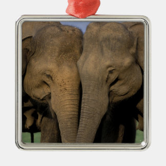 Asia, India, Nargahole National Park. Indian 2 Christmas Ornament