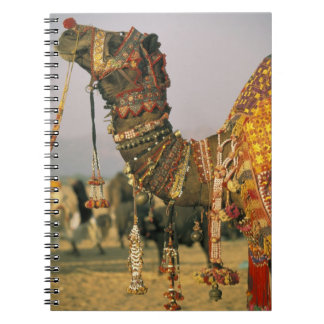 Asia, India, Pushkar. Camel Shamu , Pushkar Notebook