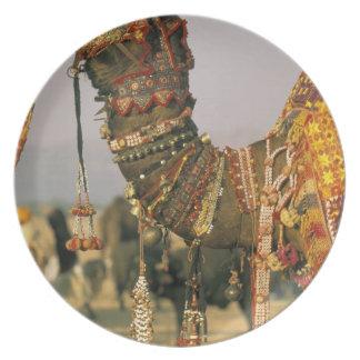 Asia, India, Pushkar. Camel Shamu , Pushkar Plate
