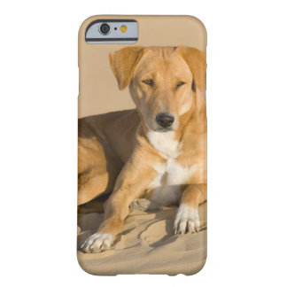 Asia, India, Rajasthan, Jaisalmer, Thar Barely There iPhone 6 Case