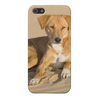 Asia, India, Rajasthan, Jaisalmer, Thar iPhone 5 Covers