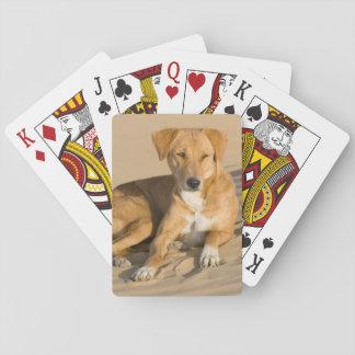 Asia, India, Rajasthan, Jaisalmer, Thar Playing Cards