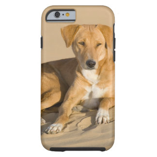 Asia, India, Rajasthan, Jaisalmer, Thar Tough iPhone 6 Case