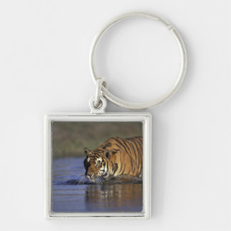 ASIA, India Tiger walking through the water 2 Silver-Colored Square Key Ring