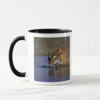 ASIA, India Tiger walking through the water 2 Mug