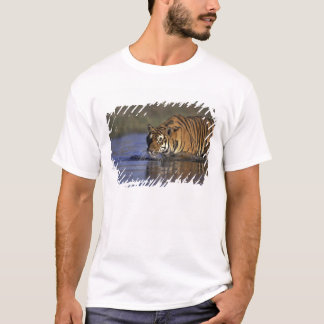 ASIA, India Tiger walking through the water 2 T-Shirt