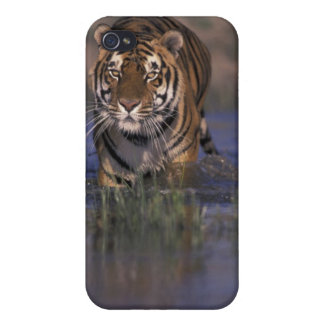 ASIA, India Tiger walking through the water iPhone 4/4S Case