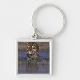 ASIA, India Tiger walking through the water Silver-Colored Square Key Ring