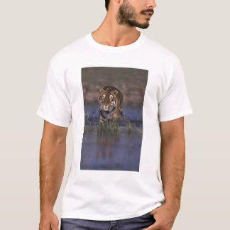 ASIA, India Tiger walking through the water T-Shirt