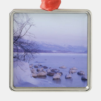 Asia, Japan, Hokkaido, Akan NP, Whopper Swans Silver-Colored Square Decoration