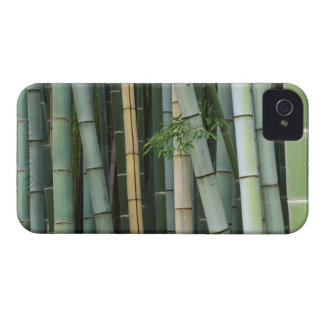 Asia, Japan, Kyoto, Arashiyama, Sagano, Bamboo iPhone 4 Cases
