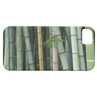 Asia, Japan, Kyoto, Arashiyama, Sagano, Bamboo iPhone 5 Case