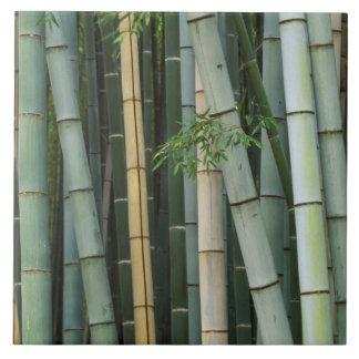Asia, Japan, Kyoto, Arashiyama, Sagano, Bamboo Tile
