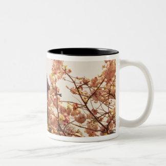 Asia, Japan, Kyoto, Kiyomizu temple in spring Two-Tone Coffee Mug