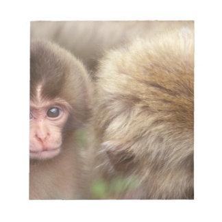 Asia, Japan, Nagano, Jigokudani, Snow Monkey 2 Notepad