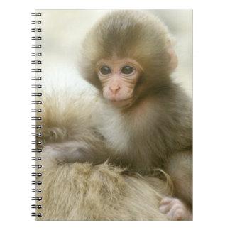 Asia, Japan, Nagano, Jigokudani, Snow Monkey 3 Notebook