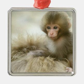 Asia, Japan, Nagano, Jigokudani, Snow Monkey 3 Silver-Colored Square Decoration