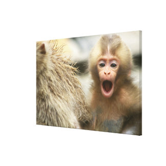 Asia, Japan, Nagano, Jigokudani, Snow Monkey Canvas Print