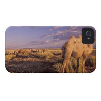 Asia, Mongolia, Gobi Desert, Great Gobi Case-Mate iPhone 4 Cases