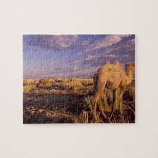 Asia, Mongolia, Gobi Desert, Great Gobi Jigsaw Puzzle