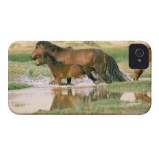 Asia, Mongolia, Gobi Desert. Wild horses. iPhone 4 Covers