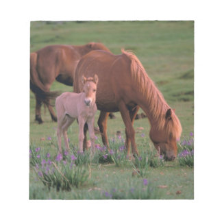 Asia, Mongolia, Gobi Desert. Wild Horses Notepad