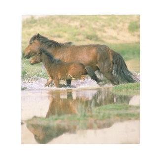 Asia, Mongolia, Gobi Desert. Wild horses. Notepad